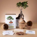 grow-it-bonsaj-1553